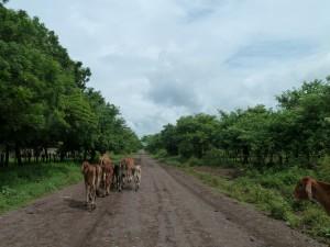 Road to Malpaisillo near Leon